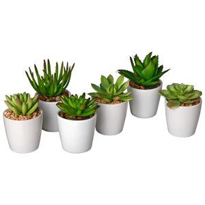 Rostlina Umělá Sukkulente I